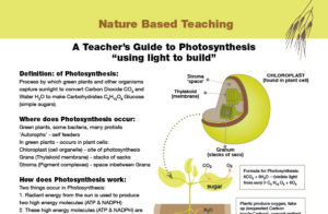 Nature Based Teaching Photosynthesis